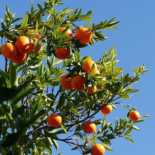 Clementine Fina