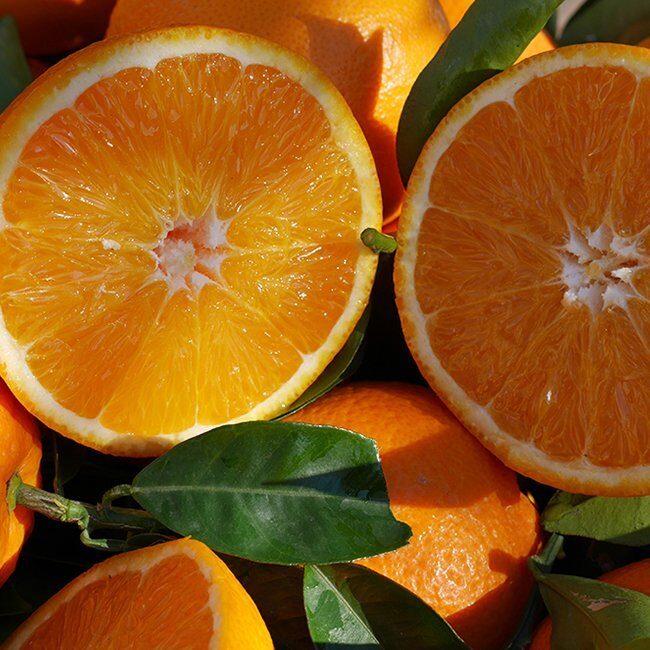 navel lane late partida naranja perdine