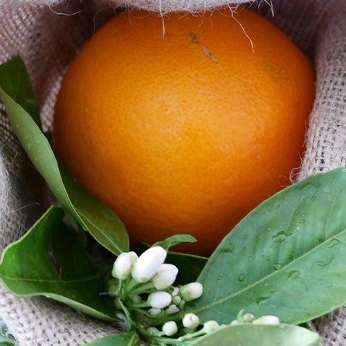 navel lane late perdine naranja