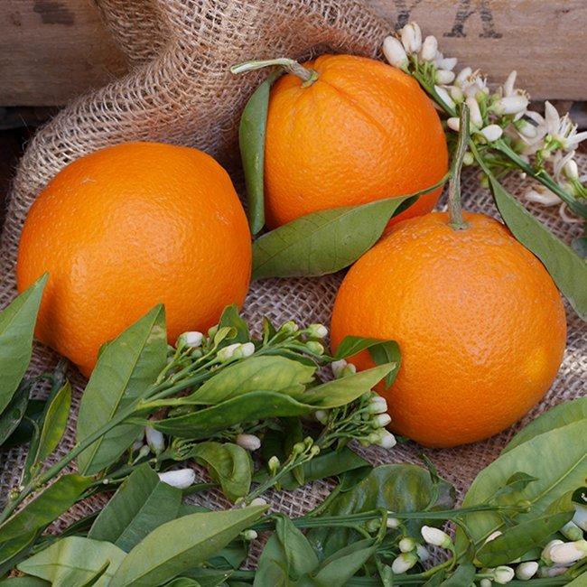 naranja navelpowell