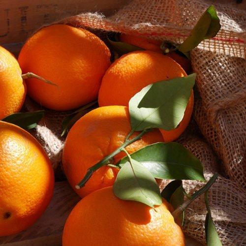 naranja navelpowell perdine navel