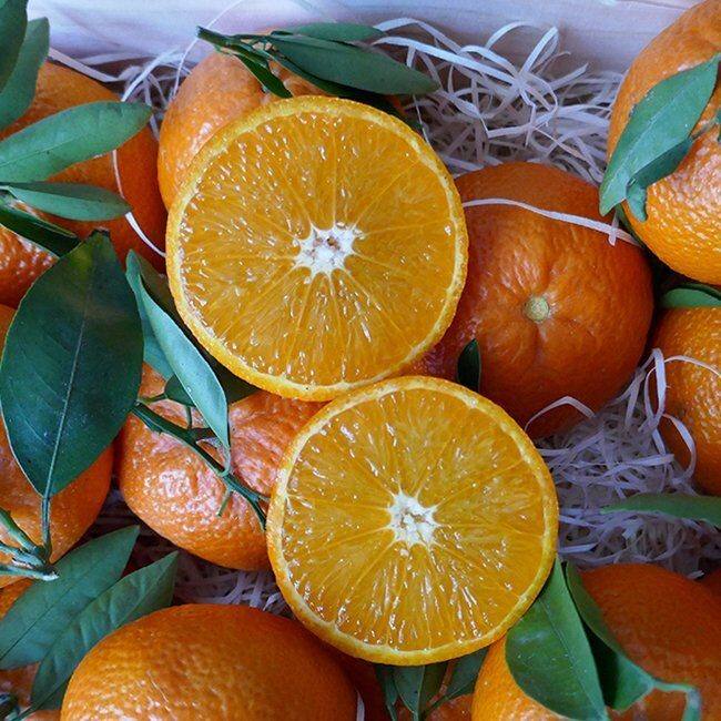 naranja interior jugoso ortanique