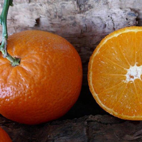 naranjas ortanique