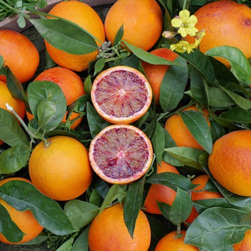 sanquinelli naranja roja perdine