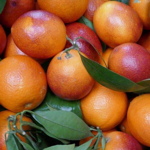 sanguinelli naranjas perdine