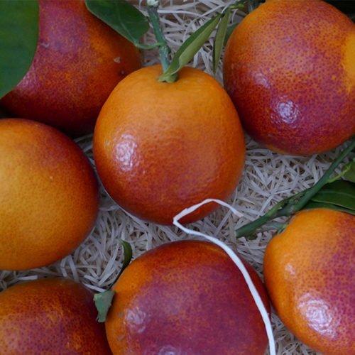 naranja sanguinelli valencia