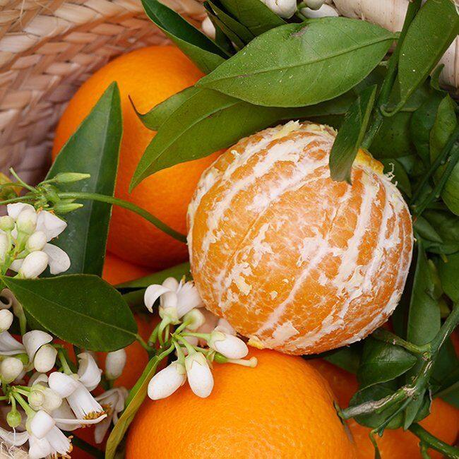 naranja valencia late pelada deliciosa